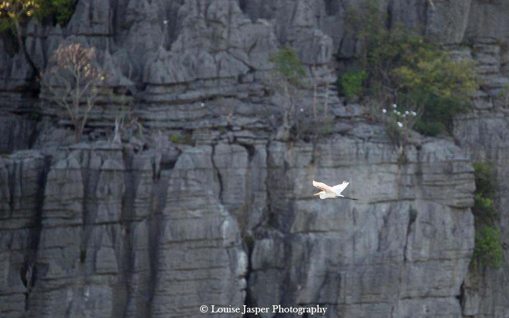 Madagascar_Iharana Bush Camp_Wildlife_heron_ garde boeuf_bird_oiseau_tsingy