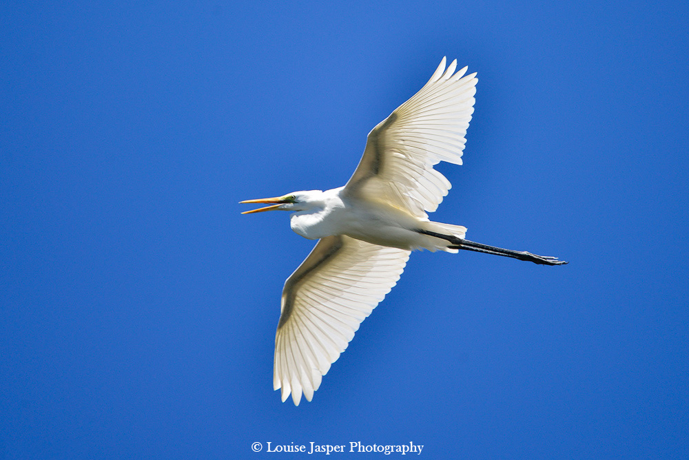 Madagascar_Iharana Bush Camp_heron_ garde boeuf_bird_oiseau